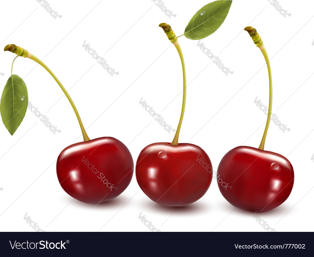 Sweet cherries with leaves vector | Price: 3 Credit (USD $3)