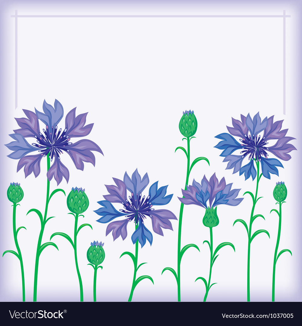 Flower border of cornflowers vector | Price: 1 Credit (USD $1)