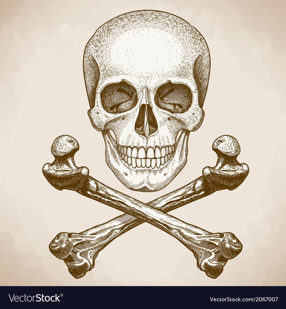 Engraving skull and bones retro style vector | Price: 1 Credit (USD $1)