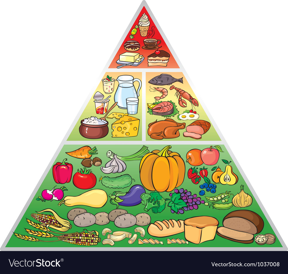 Food pyramid vector | Price: 3 Credit (USD $3)