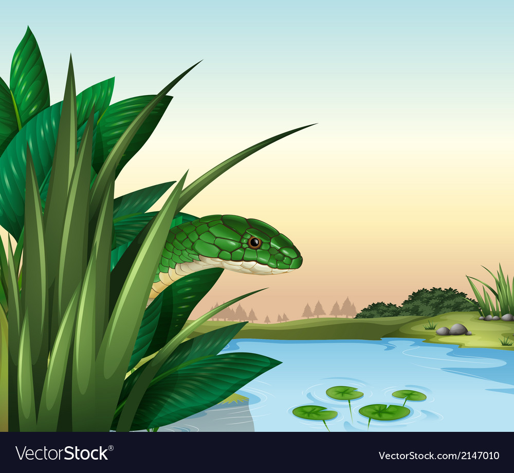 A green snake at the pond vector | Price: 1 Credit (USD $1)
