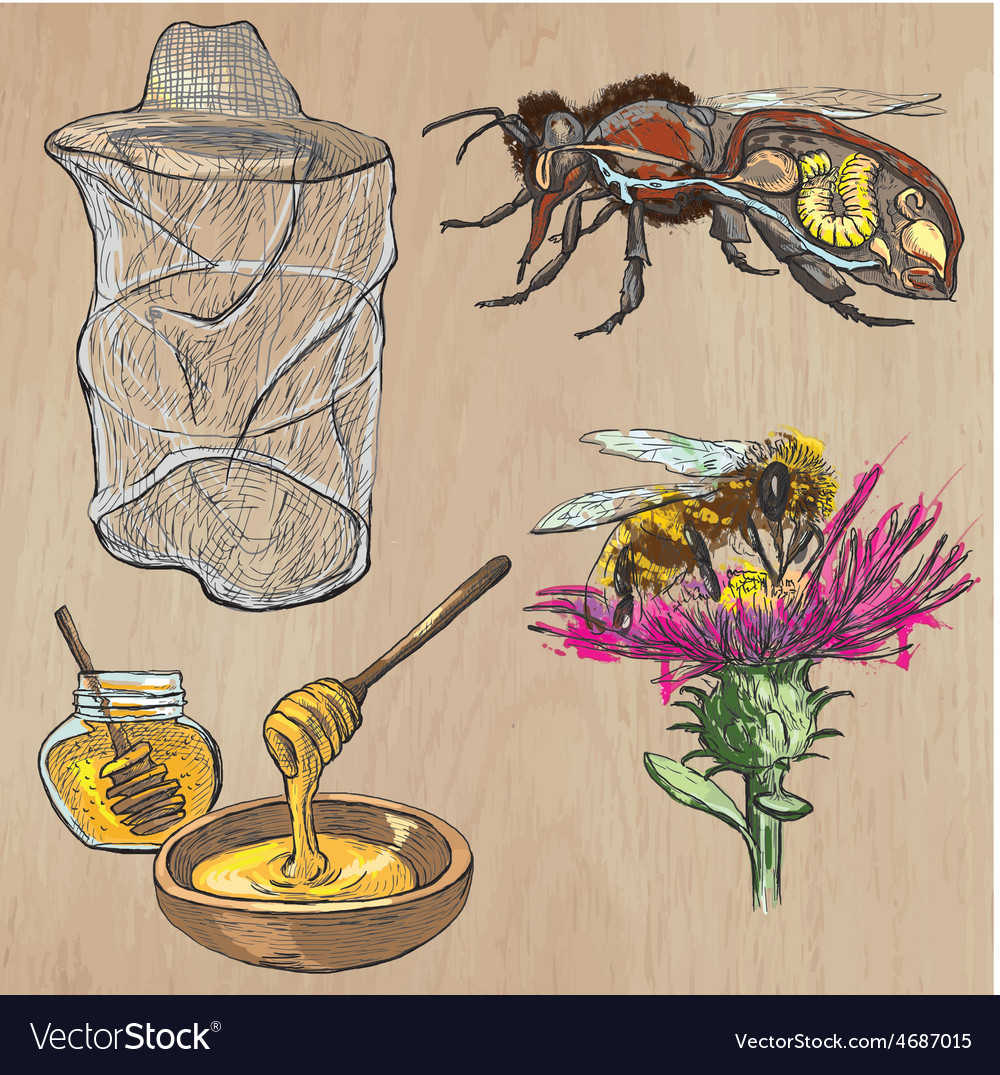 Bees beekeeping and honey - hand drawn pack 1 vector | Price: 3 Credit (USD $3)