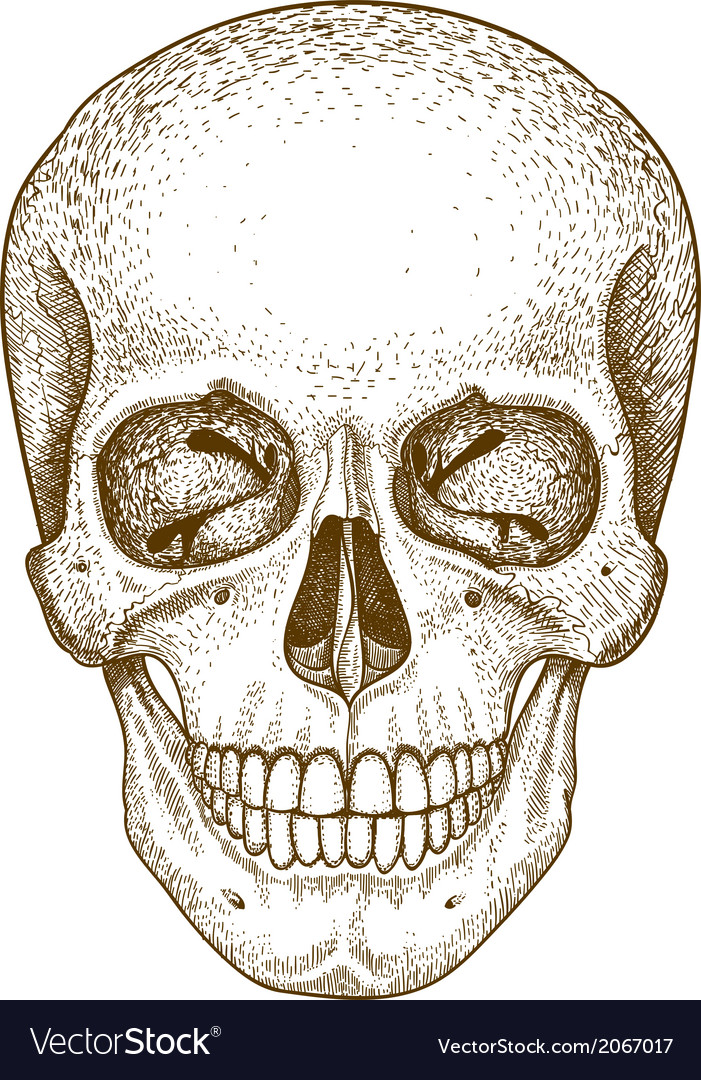 Engraving skull vector | Price: 1 Credit (USD $1)