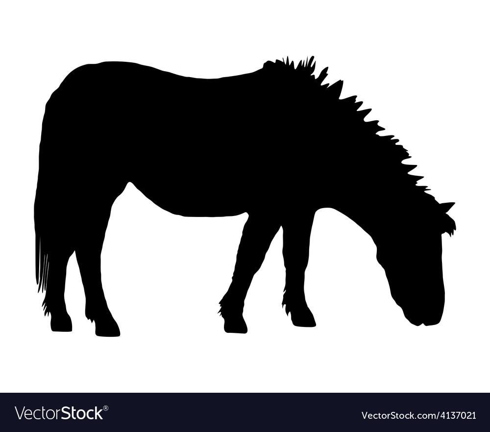 Pony grazing vector | Price: 1 Credit (USD $1)