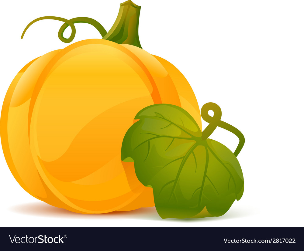 Pumpkin with leaf vector | Price: 1 Credit (USD $1)