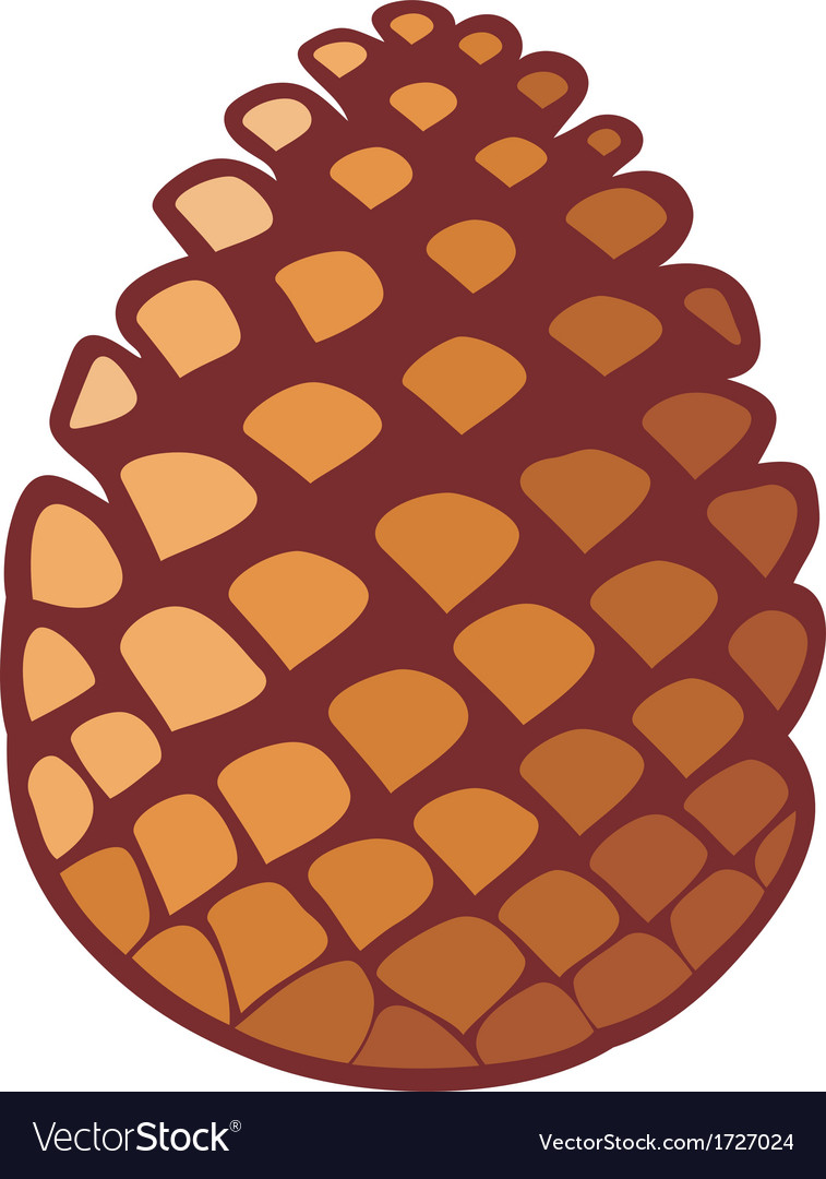 Pine cone vector | Price: 1 Credit (USD $1)