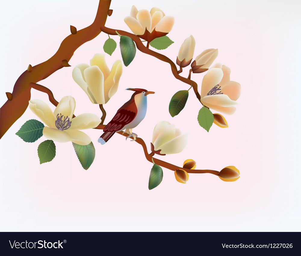 Blooming magnolia in spring a bird vector | Price: 1 Credit (USD $1)