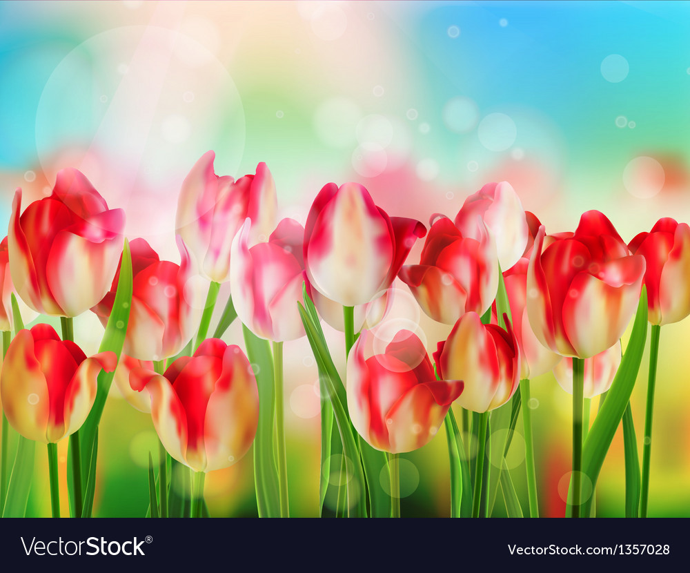 Easter spring background with tulips eps 10 vector | Price: 1 Credit (USD $1)