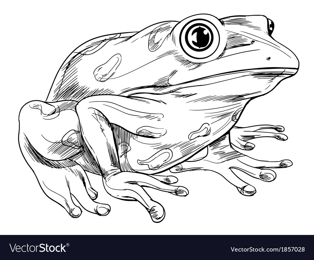 Frog outline vector | Price: 1 Credit (USD $1)