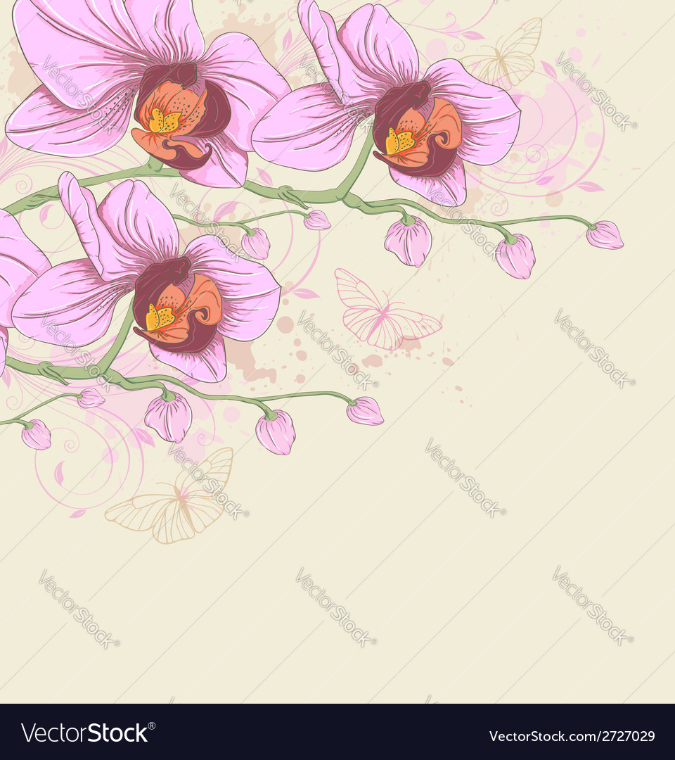 Pink orchids and butterflies vector | Price: 1 Credit (USD $1)