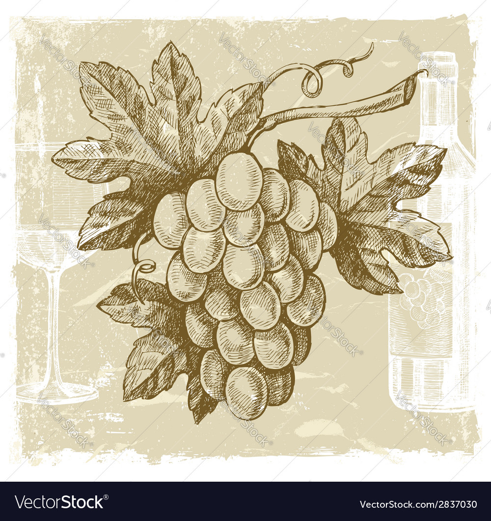 Hand drawn grape vector | Price: 1 Credit (USD $1)