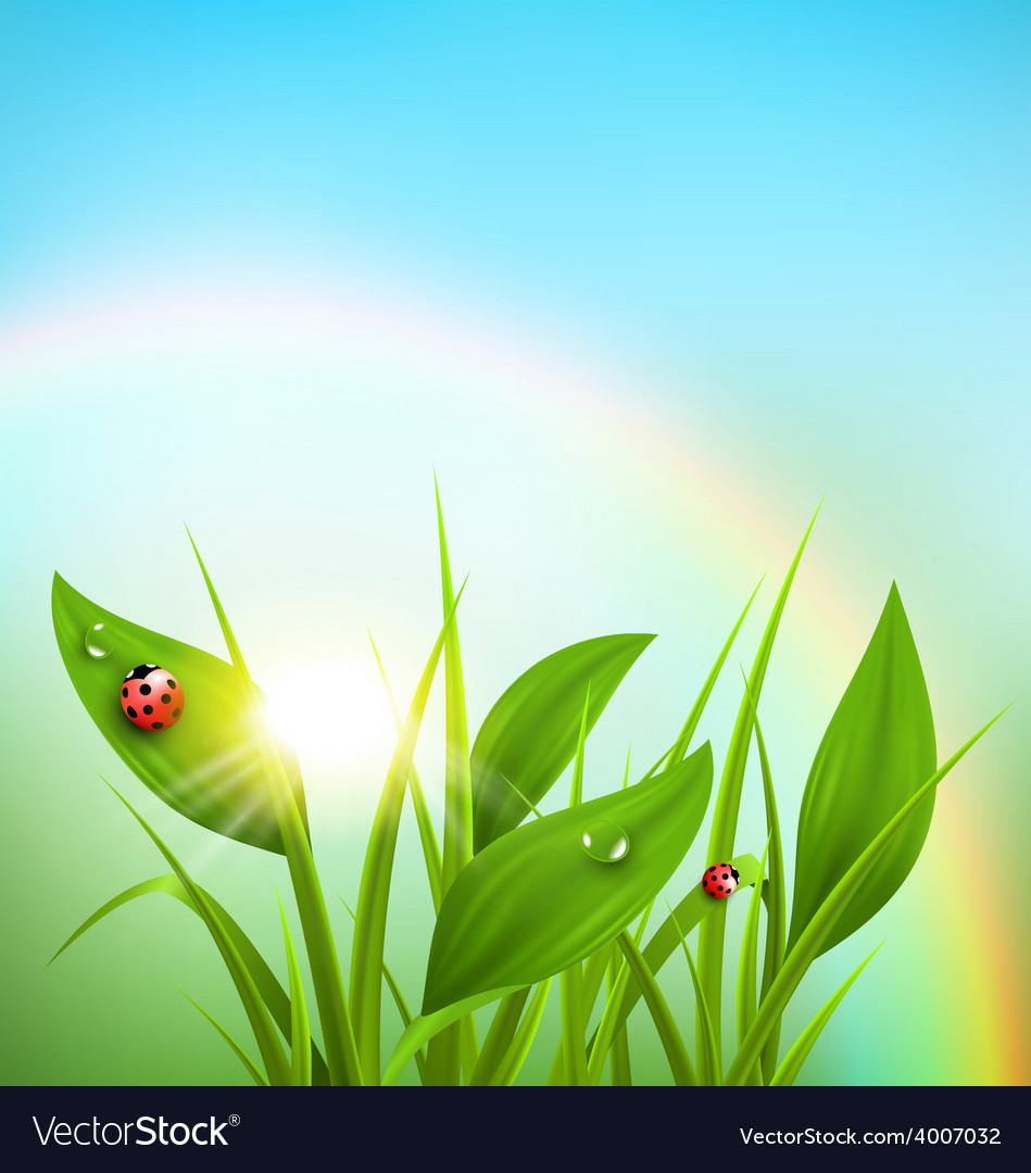 Green grass plantain and ladybugs with sunrise and vector | Price: 1 Credit (USD $1)