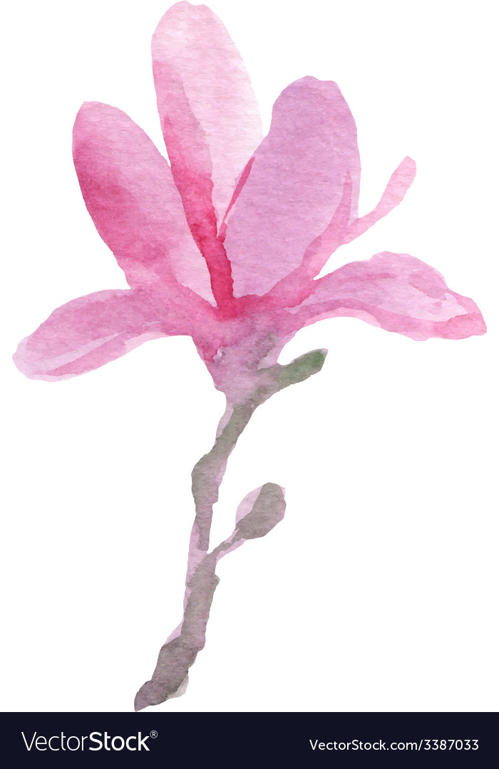 Watercolor magnolia vector | Price: 1 Credit (USD $1)