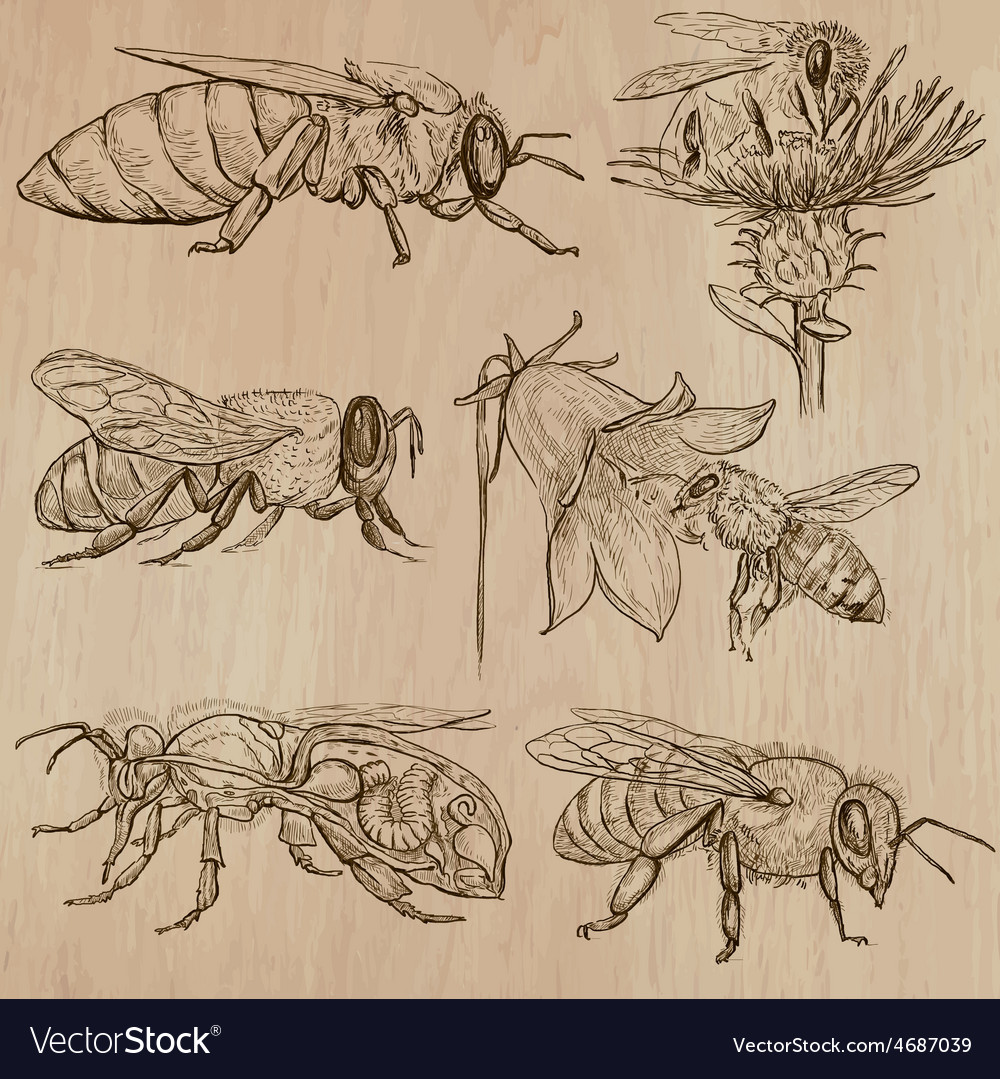 Bees beekeeping and honey - hand drawn pack 3 vector | Price: 3 Credit (USD $3)