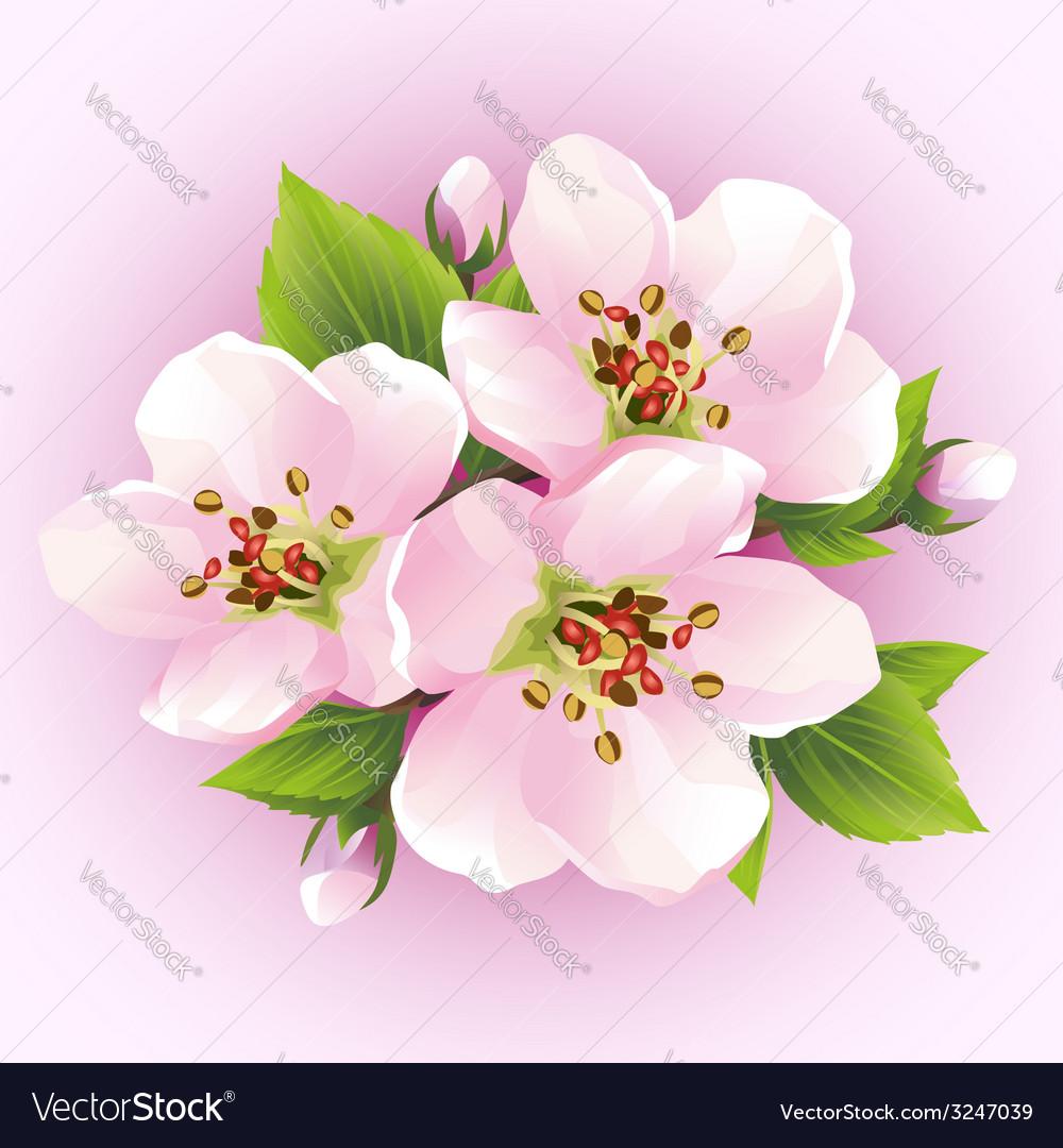 Japanese cherry tree blossoming branch of sakura vector   Price: 1 Credit (USD $1)