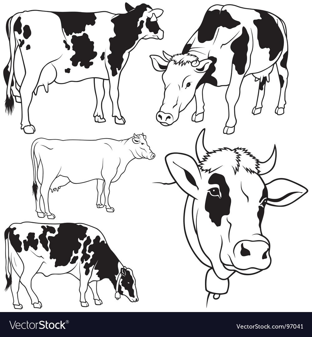 Cow set vector | Price: 1 Credit (USD $1)
