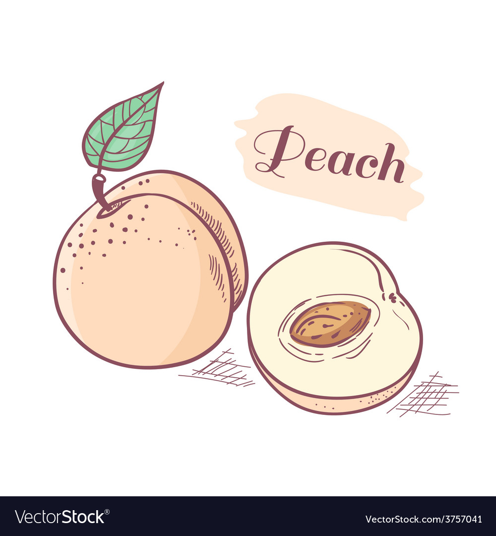 Peach with slice vector | Price: 1 Credit (USD $1)