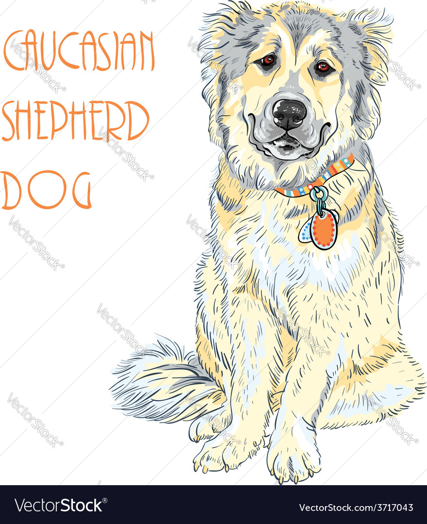 Caucasian shepherd dog breed vector | Price: 1 Credit (USD $1)