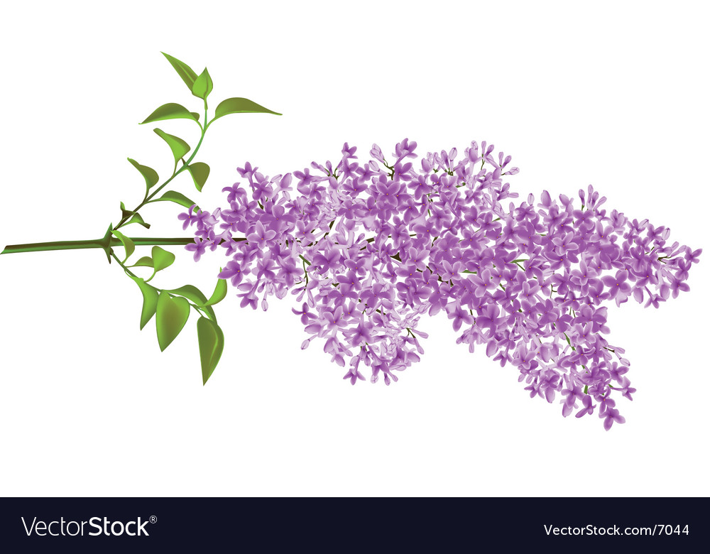 Lilac vector | Price: 1 Credit (USD $1)