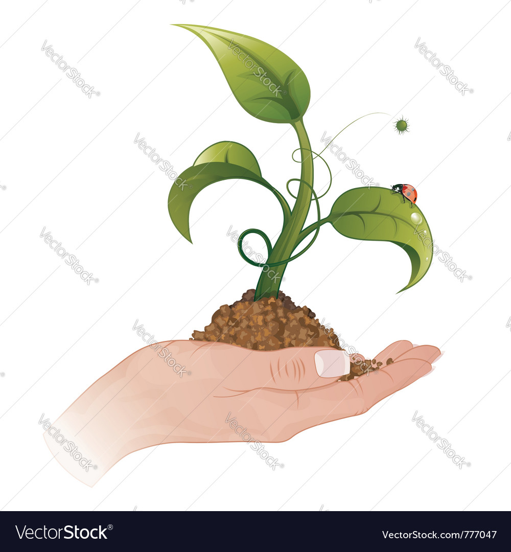 Young green sprout vector | Price: 1 Credit (USD $1)