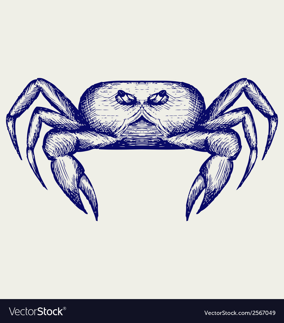 Crab sketch vector | Price: 1 Credit (USD $1)
