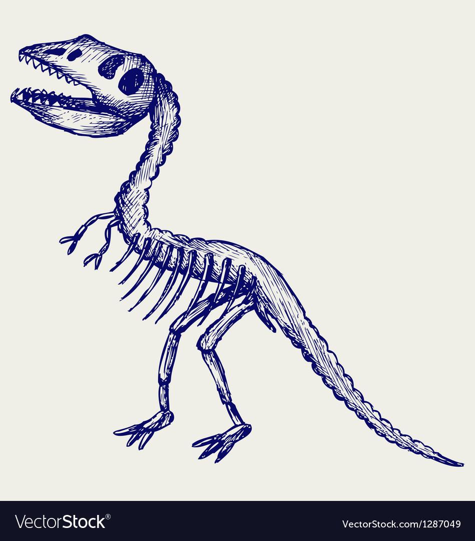 Tyrannosaurus skeleton vector | Price: 1 Credit (USD $1)