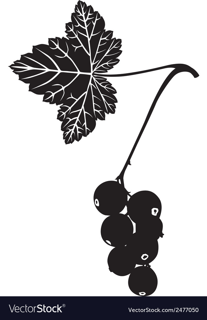 Currant silhouette vector   Price: 1 Credit (USD $1)