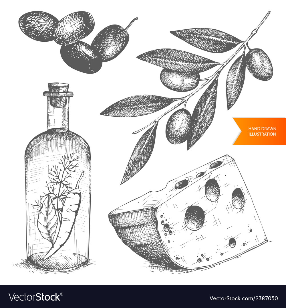 Decorative engraved olive isolated on white vector   Price: 1 Credit (USD $1)