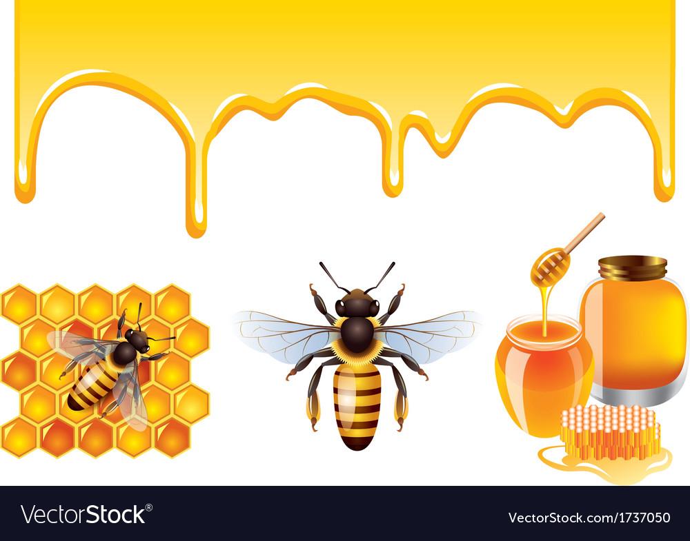 Honey set vector | Price: 1 Credit (USD $1)