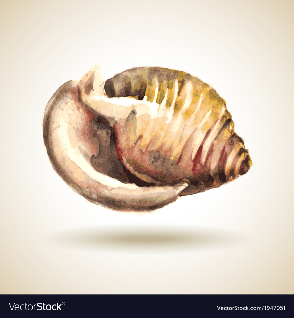 Watercolor shell vector   Price: 1 Credit (USD $1)