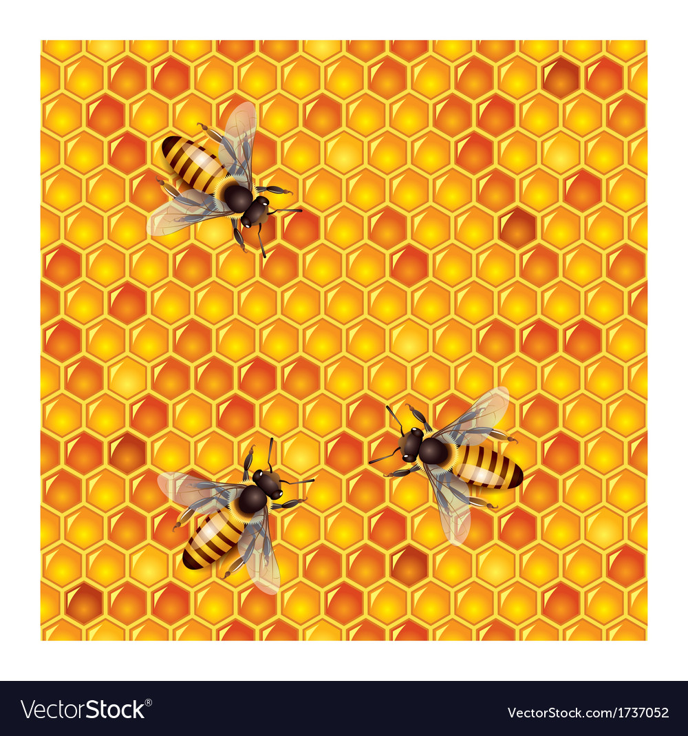 Honeycells bees seamless vector | Price: 1 Credit (USD $1)