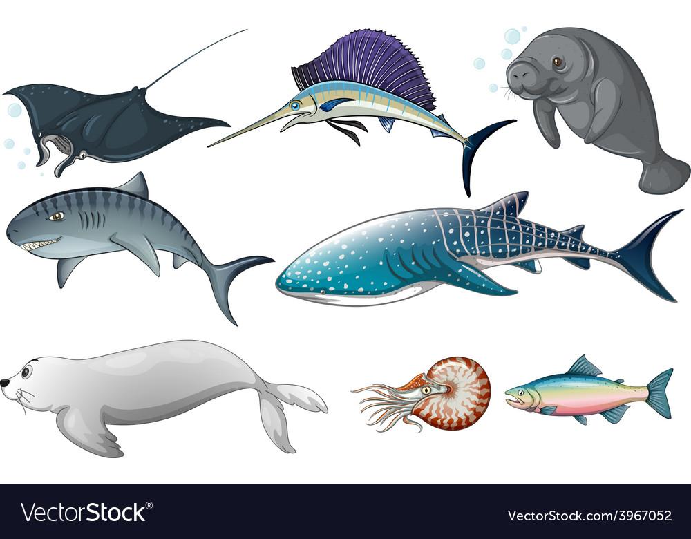 Ocean animals vector | Price: 1 Credit (USD $1)