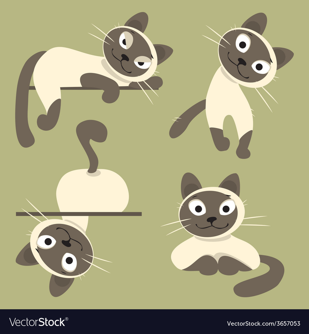 Set of siamese cats vector | Price: 1 Credit (USD $1)