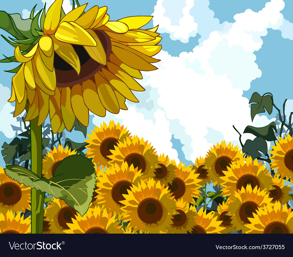 Sunflower on the background of sunflowers vector | Price: 3 Credit (USD $3)
