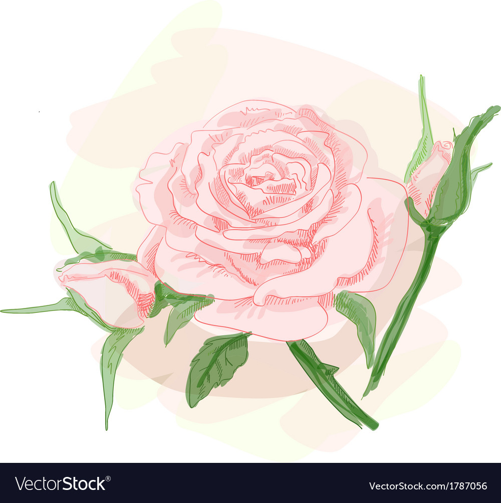 Bouquet of pink roses image vector | Price: 1 Credit (USD $1)