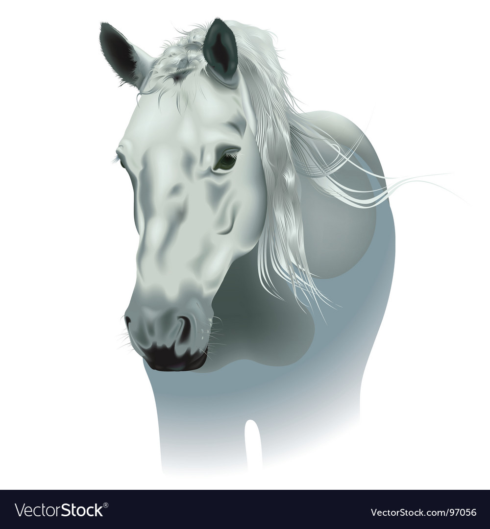 White horse vector | Price: 3 Credit (USD $3)