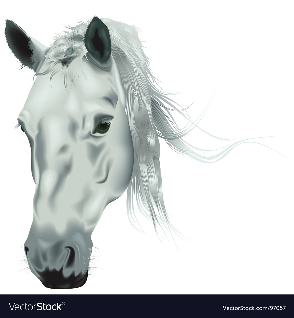 Horse head vector | Price: 3 Credit (USD $3)