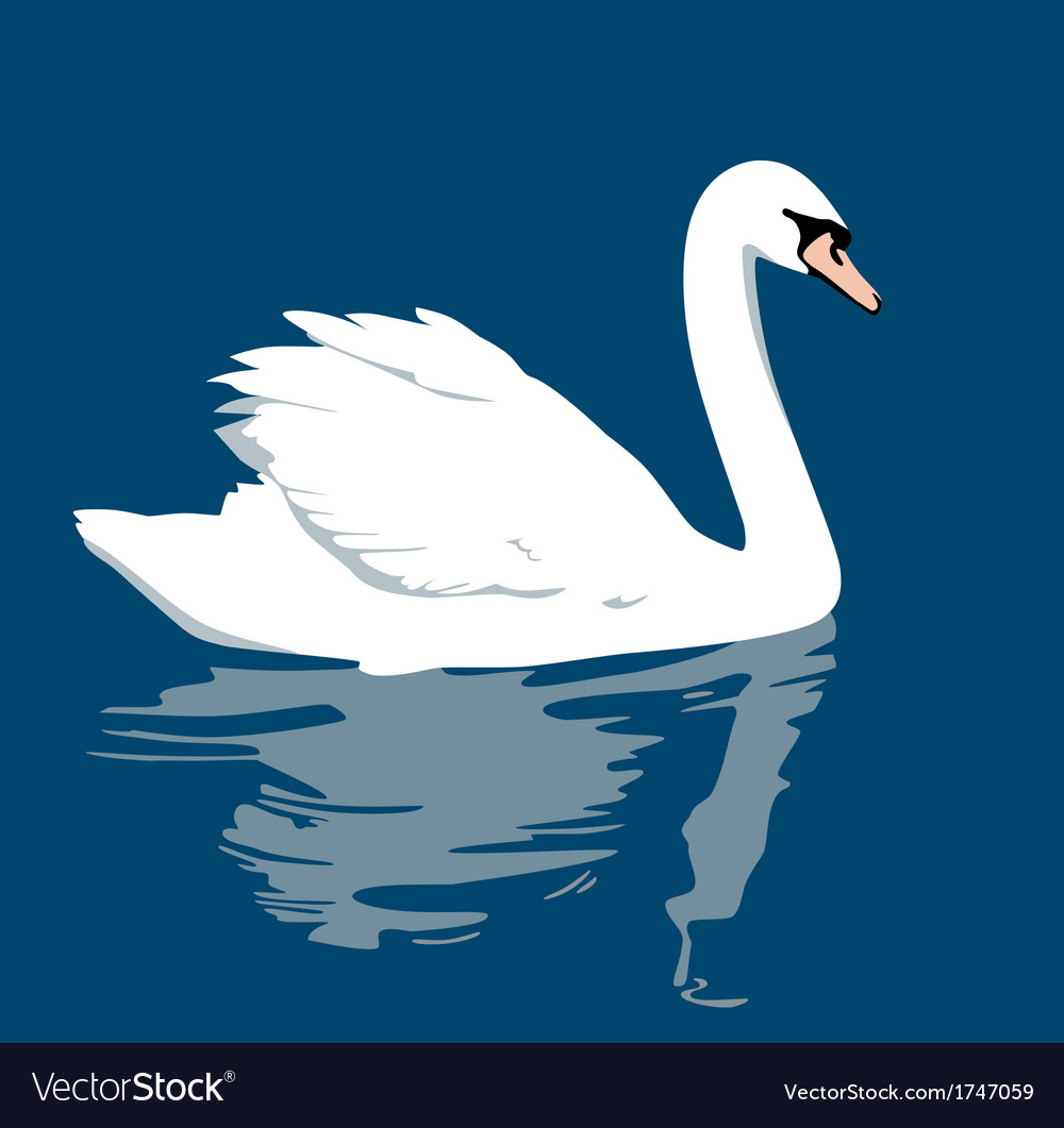 Swan white vector | Price: 1 Credit (USD $1)
