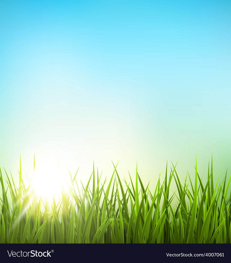Green grass lawn with sunrise on blue sky floral vector | Price: 1 Credit (USD $1)
