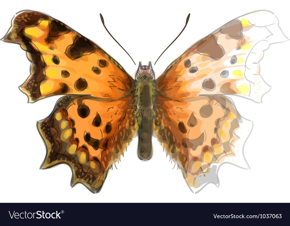Butterfly polygonia c-album vector | Price: 1 Credit (USD $1)