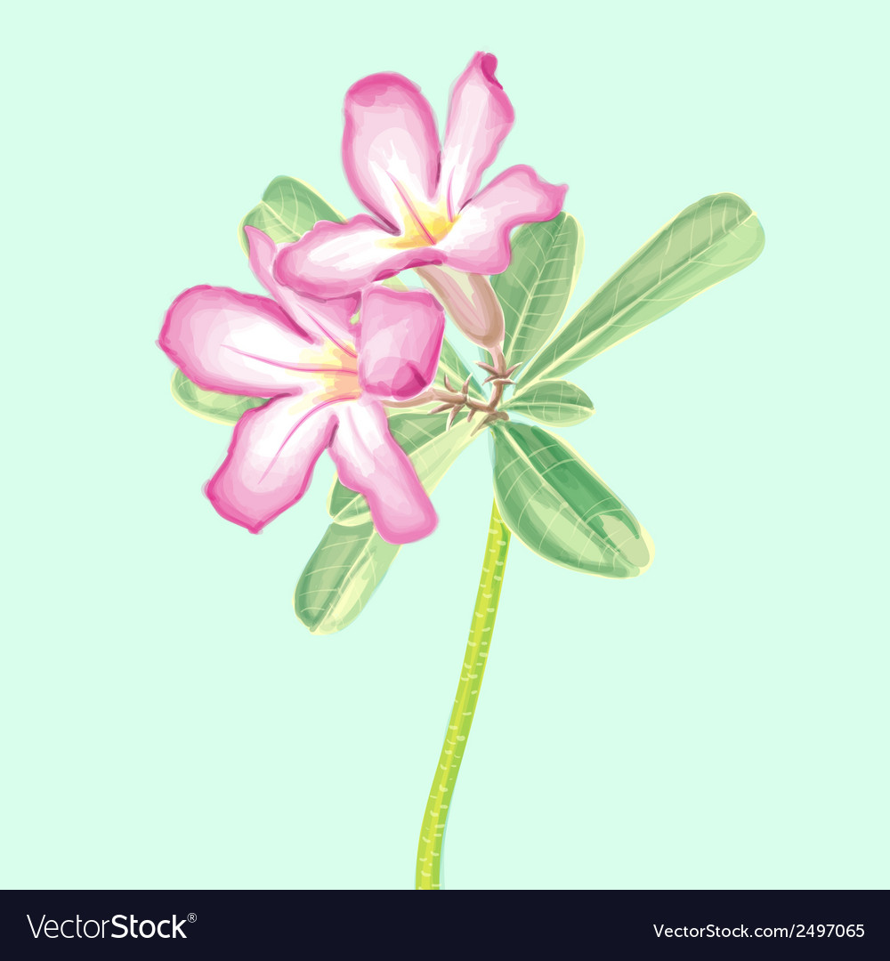 Watercolor painting of impala lily vector | Price: 1 Credit (USD $1)