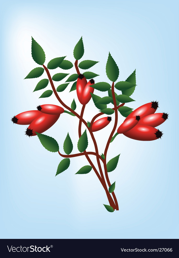 Rosehip vector | Price: 1 Credit (USD $1)