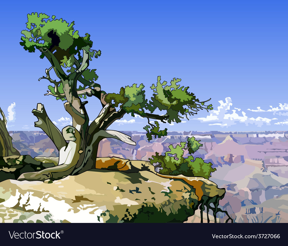 Tree on a rocky ledge above the canyon vector | Price: 3 Credit (USD $3)