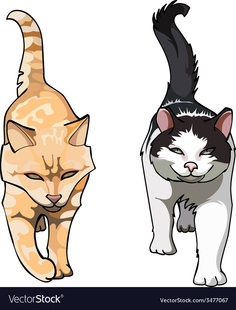 Two cats with their tails up walking frontally vector | Price: 1 Credit (USD $1)