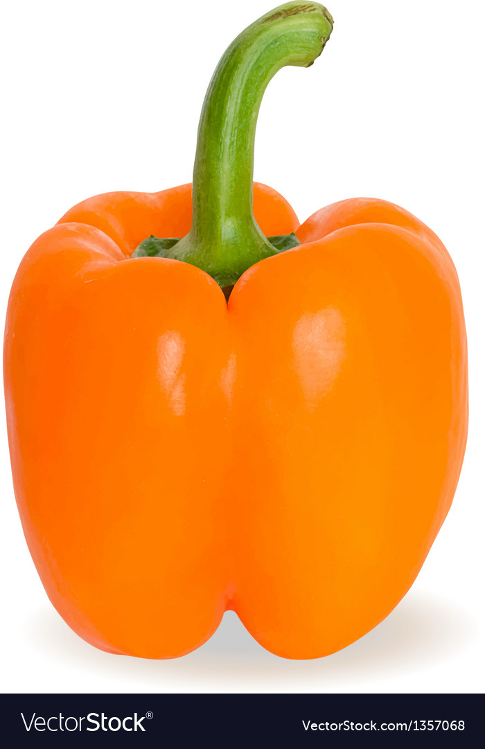 Realistic of orange pepper or paprika vector | Price: 1 Credit (USD $1)