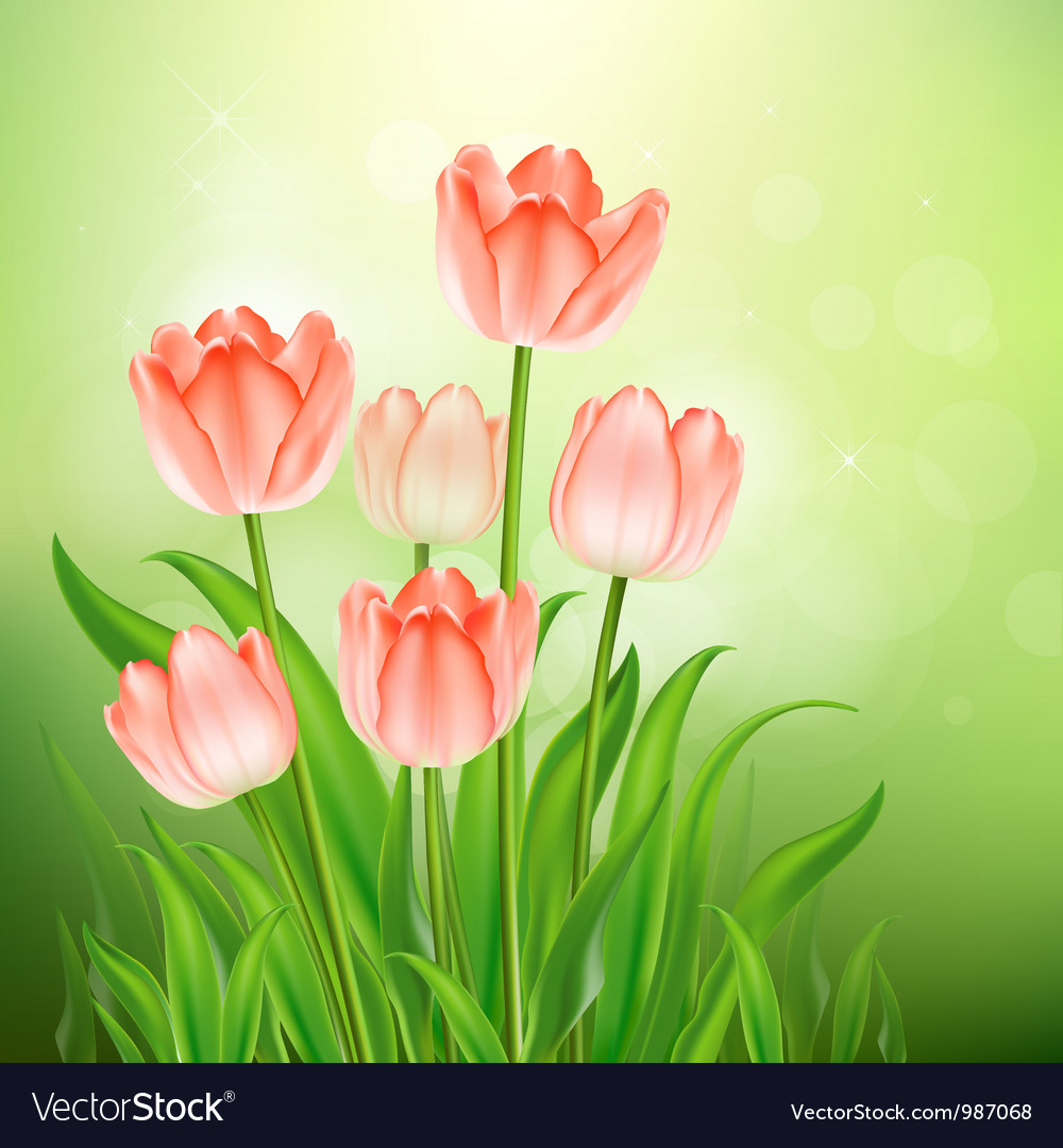 Tulips vector | Price: 3 Credit (USD $3)