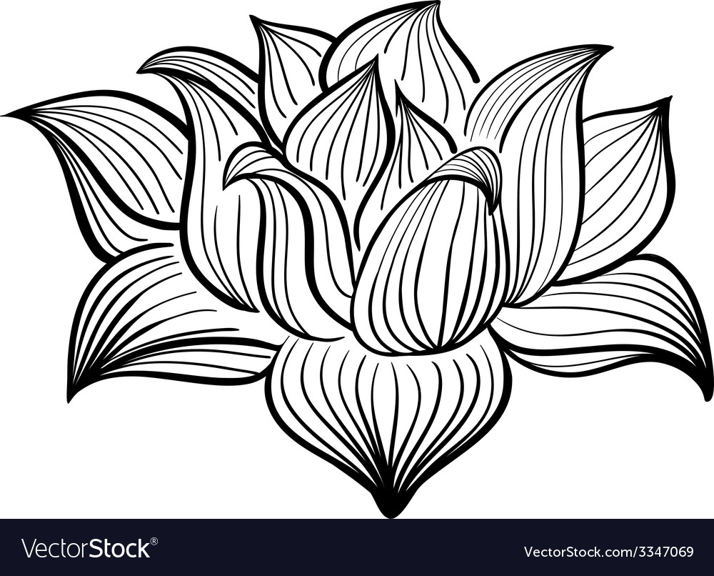 Black and white lotus flower vector | Price: 1 Credit (USD $1)