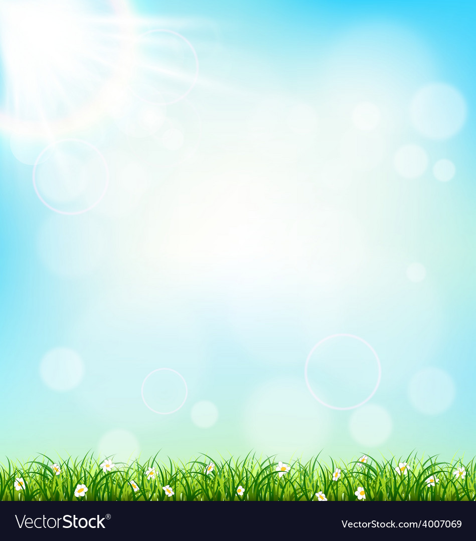 Green grass lawn with chamomiles on blue sky vector | Price: 1 Credit (USD $1)