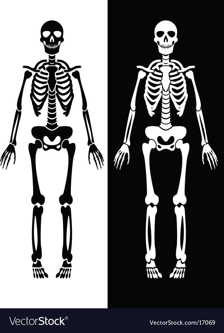 Skeleton vector | Price: 1 Credit (USD $1)