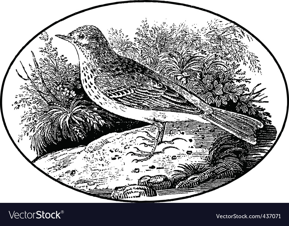 Engraving of bird vector | Price: 1 Credit (USD $1)
